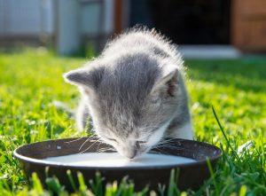 غذای مورد علاقه گربه ها