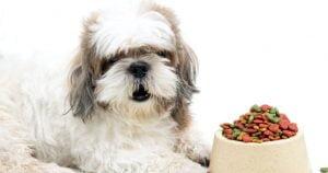 غذای سگ شیتزو تریر