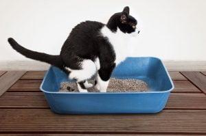 اموزش دستشویی بچه گربه