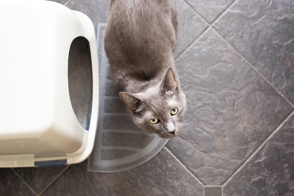 علت خون در مدفوع گربه